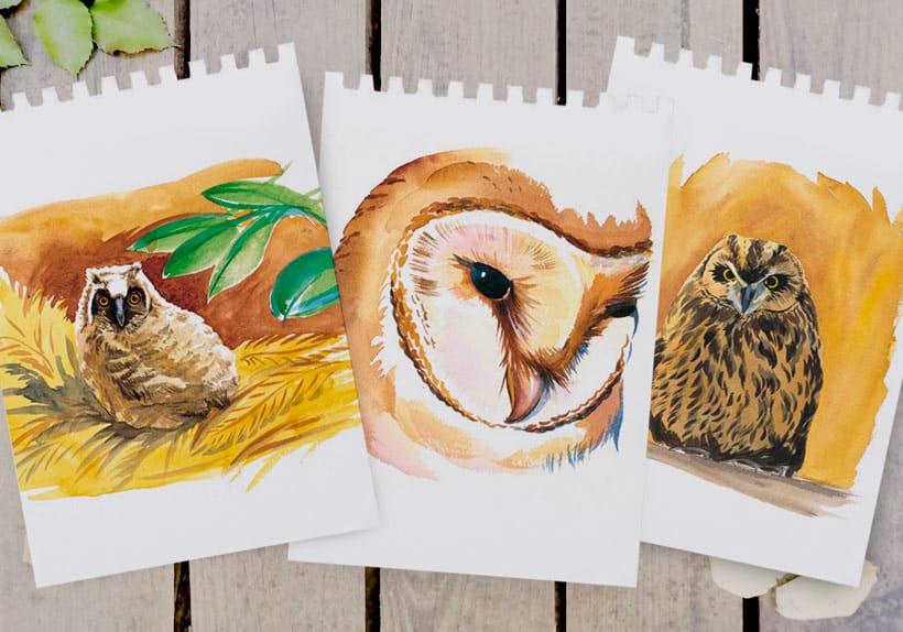 illustration aquarelle de chouettes nid jeune masque facial parc naturel régional
